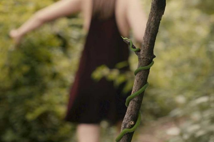 Vines VFX Animation